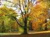 Zum Bild Nr. 7 (Herbst) 