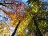 Zum Bild Nr. 27 (Herbst) 