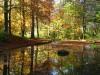 Zum Bild Nr. 6 (Herbst) 