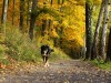 Zum Bild Nr. 21 (Herbst) 