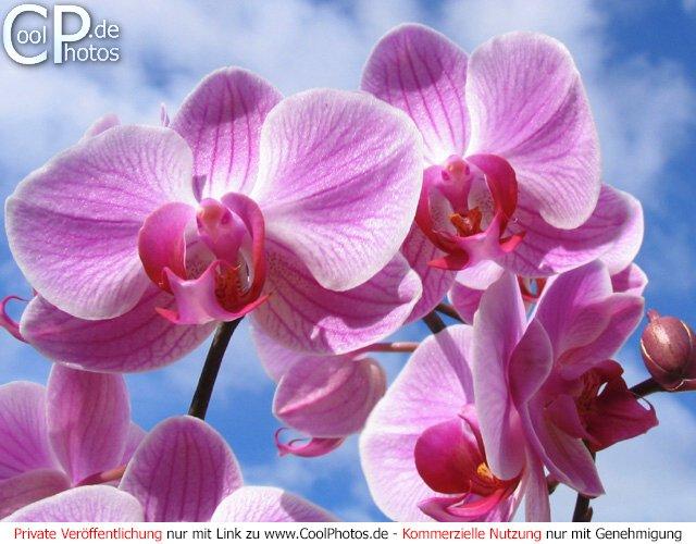 Aktuelle seite startseite fotos blumen orchideen bild nr 6