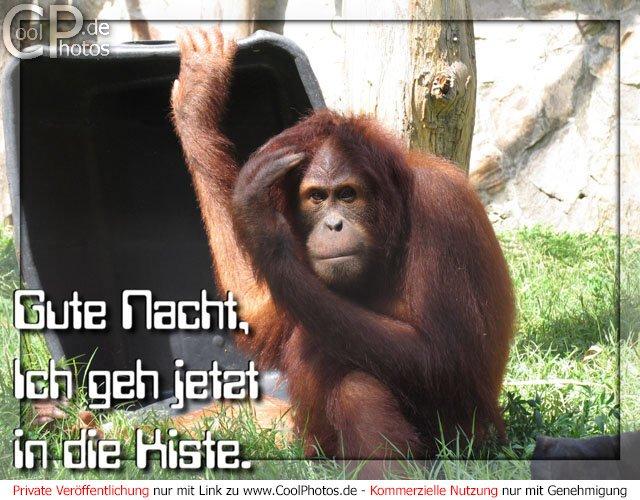 http://www.coolphotos.de/bilder2/05/0730_1705_gute_nacht.jpg