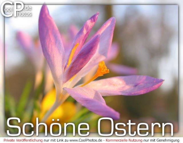 640 x 500 jpeg 57kB, Ostergre Kostenlos | Search Results | Calendar ...