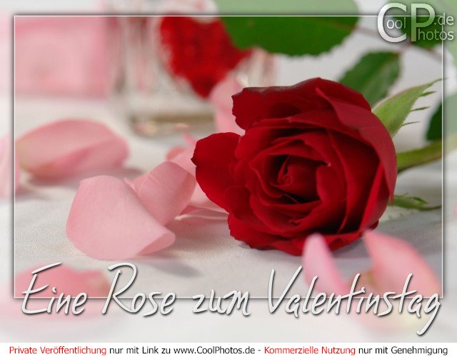 gru karten eine rose zum valentinstag. Black Bedroom Furniture Sets. Home Design Ideas