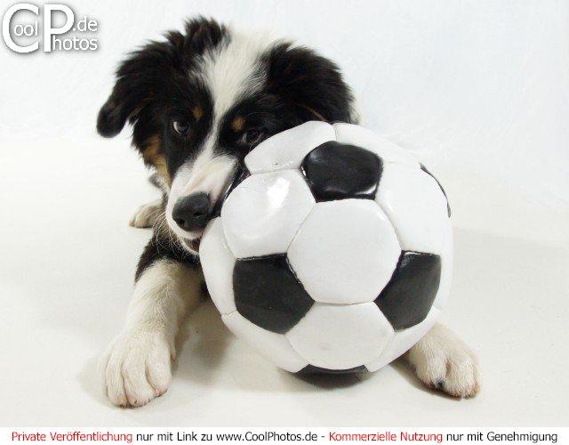 Bild nr 3 tierische sportfotos welpe mit einem fußball