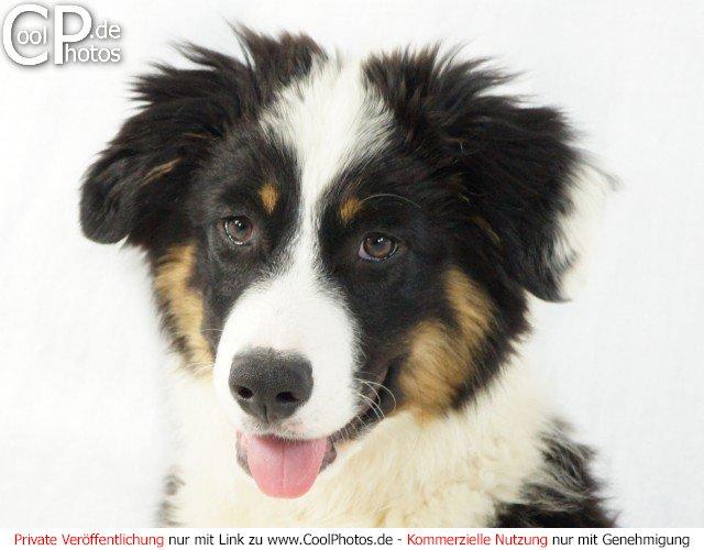 Bild nr 171 hunde portraitfoto eines niedlichen welpen