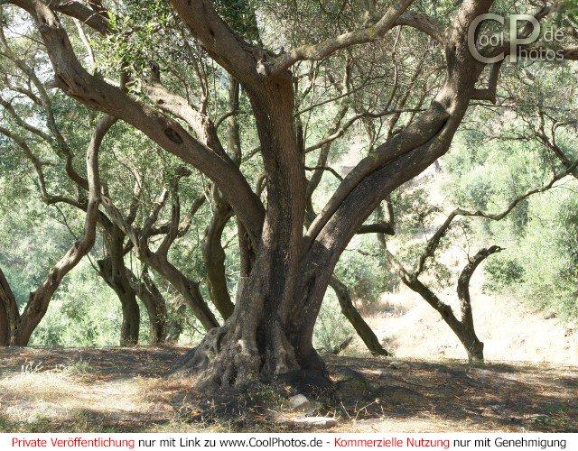 Bild nr. 26 (bäume)