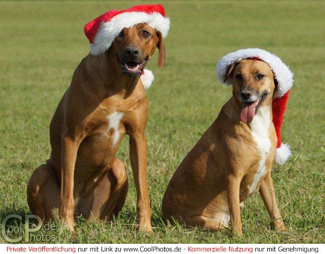 Gru karten feiertage advents und - Weihnachtskarten kostenlos verschicken ...