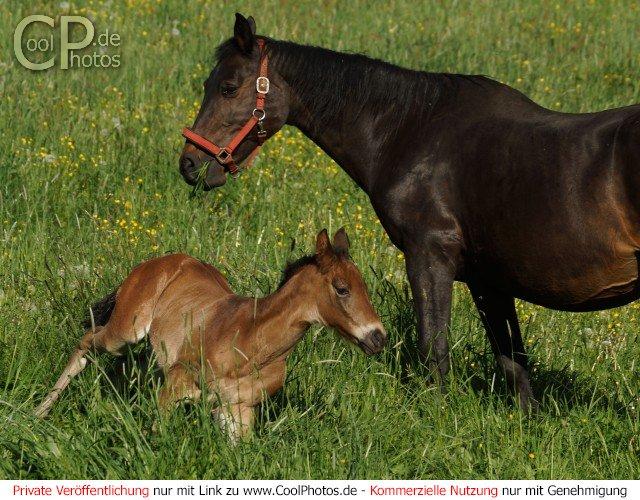 Tiere gt pferde gt pferde 31