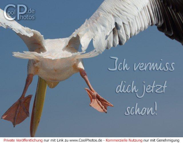 CoolPhotos.de - Grußkarten - Ich vermiss dich jetzt schon!