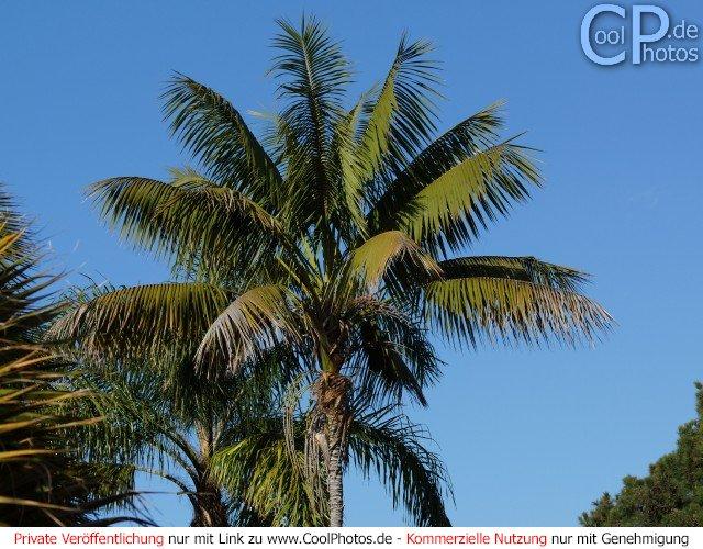 Fotos madeira portugal blätter und bäume bild nr 11