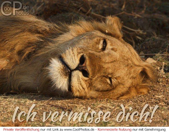 GB Pics - Jappy Bilder - GB Bilder - Gästebuchbilder