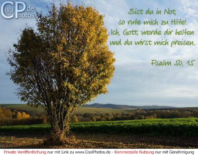 Bild Nr. 1 (Neue Bilder) 