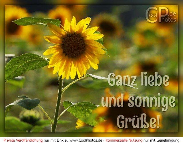 CoolPhotos.de - Grußkarten - Ganz liebe und sonnige Grüße!