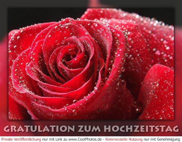 ... Nr. 42 (Allgemeine Hochzeitstage) Gratulation zum Hochzeitstag