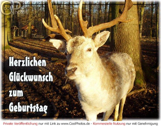Coolphotos De Fotos Geburtstagskarten Fur Jager Schutzen