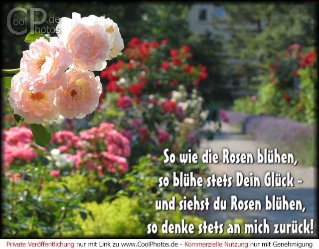so wie die rosen bl hen so bl he stets dein gl ck und siehst du rosen bl hen. Black Bedroom Furniture Sets. Home Design Ideas