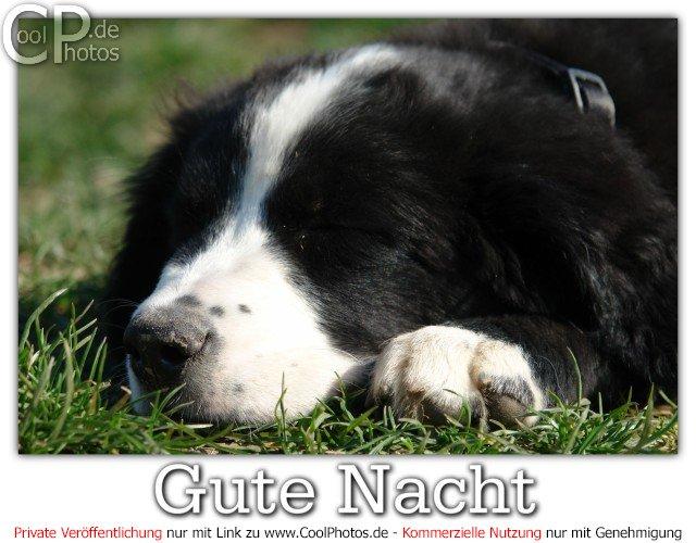"""Résultat de recherche d'images pour """"guthe nachtr"""""""