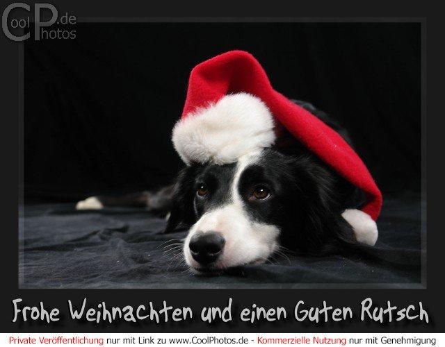 Frohe Weihnachten Lustige Bilder.Coolphotos De Frohe Weihnachten Und Einen Guten Rutsch