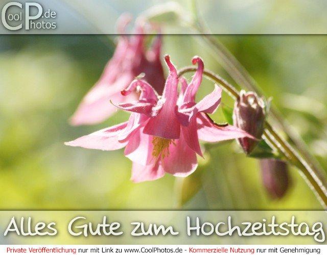 CoolPhotos.de - Allgemeine Hochzeitstage - Alles Gute zum Hochzeitstag