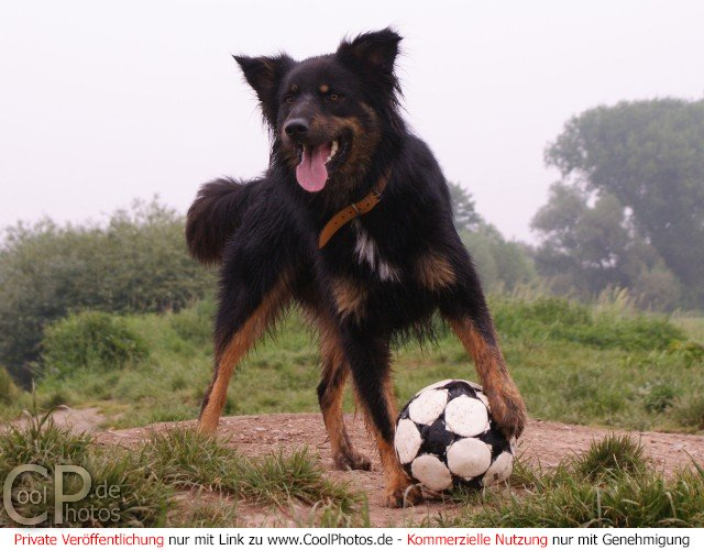 Hund beim Fußballspiel