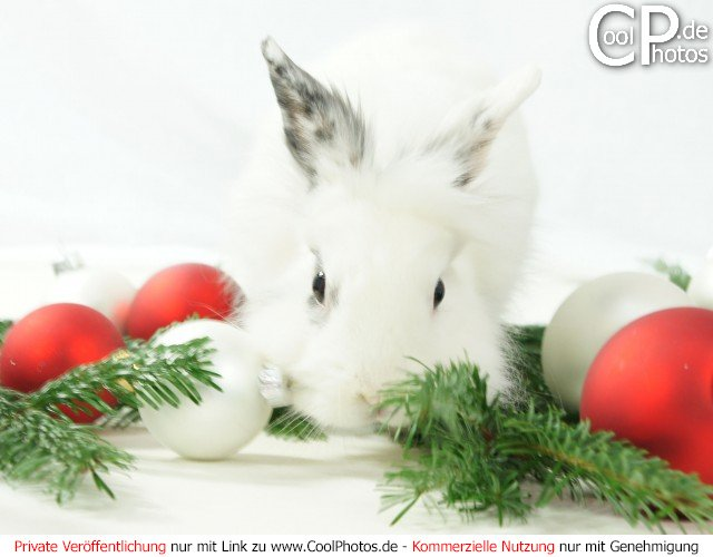 Fotos tiere tierische weihnachtsbilder - Weihnachtskarten verschicken kostenlos ...
