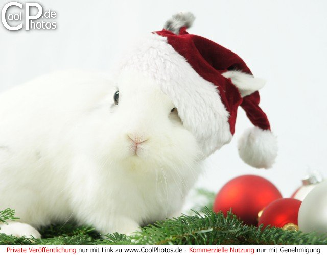 Weihnachtsbilder Tannenzweig.Coolphotos De Grußkarten Tierische Weihnachtsbilder
