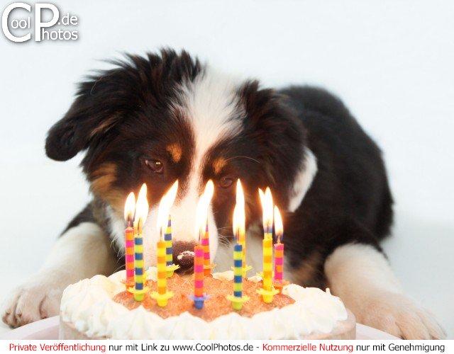 Frauensex mit Hund kostenlose Vorschau