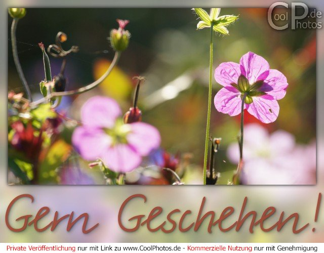 0905_03685_gern_geschehen.jpg