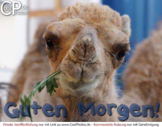 "Search Results for ""Gute Morgen Bilder"" – Calendar 2015"