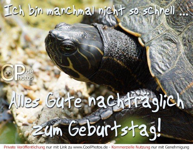Nachträgliche Geburtstagswünsche Und Grüße Pictures to pin on ...