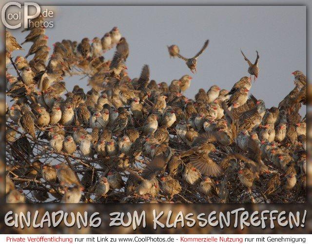 CoolPhotos.de - Einladungskarten - Einladung zum Klassentreffen!