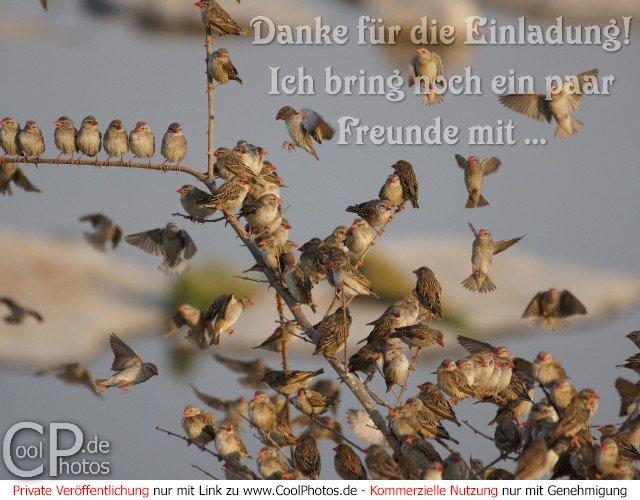 coolphotos.de - danke für die einladung! ich bring noch ein paar, Einladungen