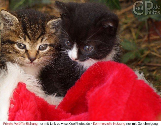 Weihnachtsbilder mit katzen kostenlos