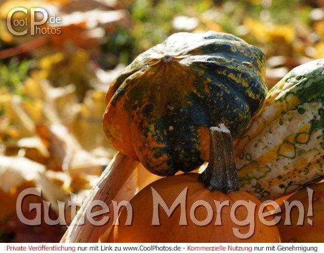 Coolphotosde Fotos Herbst Kürbiskarten Guten Morgen
