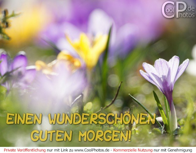 CoolPhotos.de - Guten Morgen - Einen wunderschönen Guten Morgen!