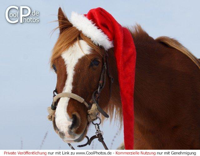 Tierische weihnachtsbilder