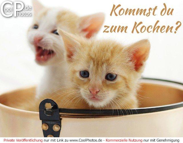 CoolPhotos.de - Einladungskarten - Kommst du zum Kochen?