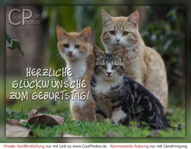 Coolphotos De Fotos Geburtstagskarten Fur Tierfreunde