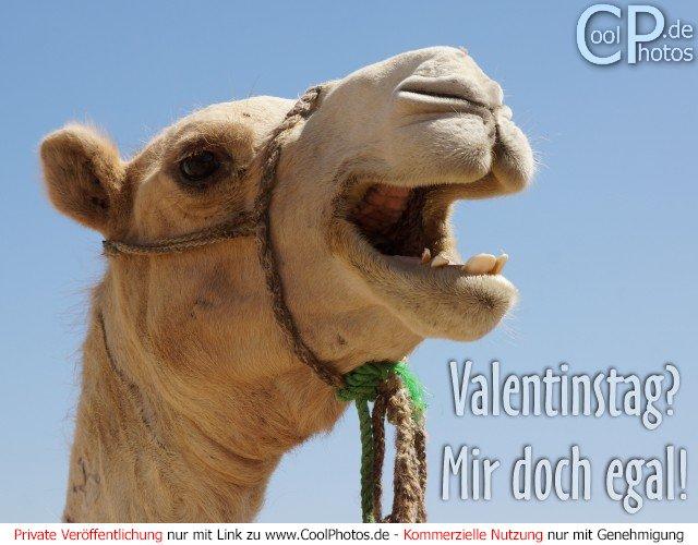 Anti Valentinstag Singles Augsburg Kostenlos