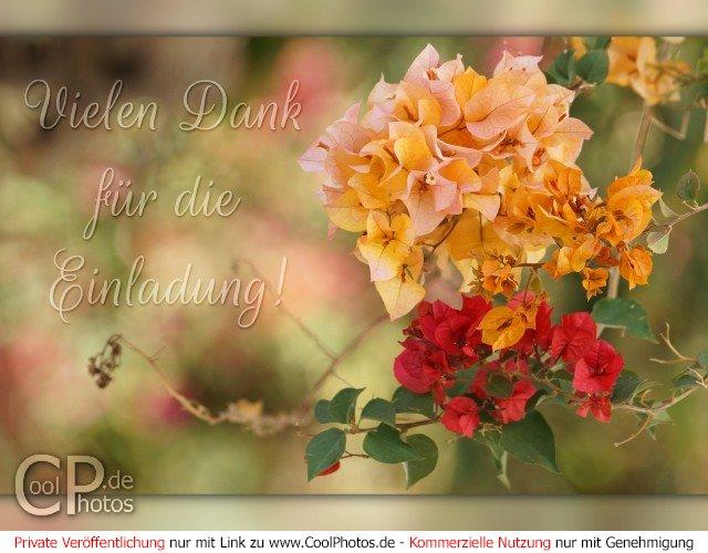 coolphotos.de - grußkarten - danke, div themen - vielen dank für, Einladung