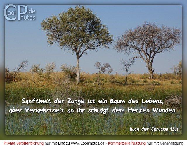 coolphotos.de - buch der sprüche - sprüche 15,4