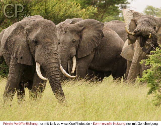 CoolPhotos.de - Fotos - Uganda - Queen Elizabeth Nationalpark