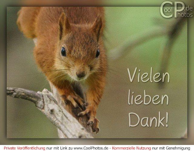 CoolPhotos.de - Grußkarten - Danke - Vielen lieben Dank