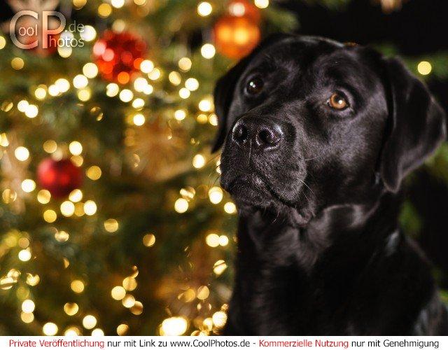 Weihnachtsbilder Mit Licht.Coolphotos De Grußkarten Hunde