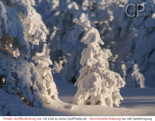 Dieses Motiv findet sich seit dem 10. Januar 2017 in der Kategorie Der Harz im Winter.