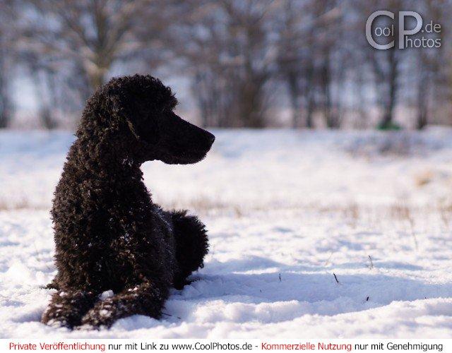 Dieses Motiv ist am 08.01.2017 neu in die Kategorie Hunde aufgenommen worden.