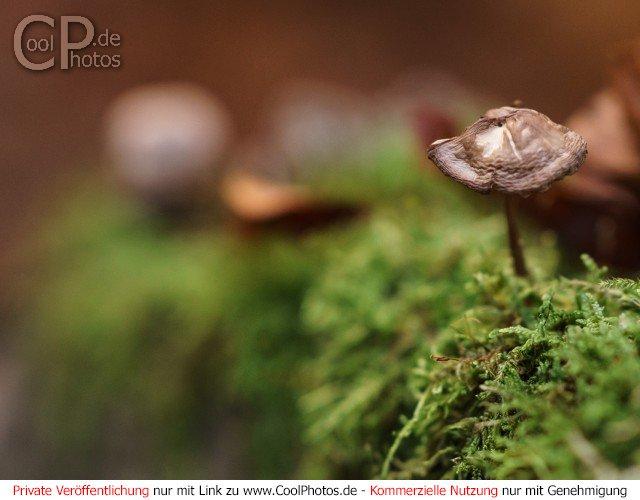 Dieses Motiv befindet sich seit dem 17. Februar 2017 in der Kategorie Pilze.