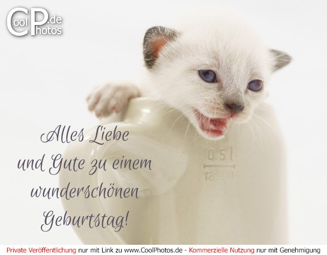 Coolphotos De Fotos Geburtstagskarten Fur Katzenliebhaber