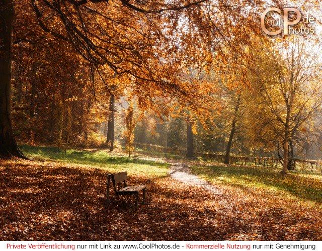 Herbstlicher Weg mit einer Bank